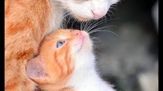 Cat Lovers - Enjoy Cute Funny Cats and Kitten Videos Mix #3