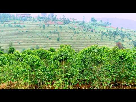 Knowledge Exchange on Sustainable Grown Coffee: Colombia, Burundi, Ethiopia and Rwanda