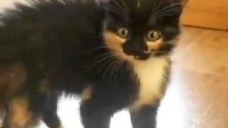 dangerous kitten/опасный и злой котёнок