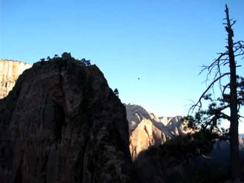 Condors at Zion National Park