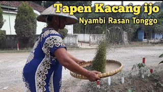 Tapen Kacang ijo nyambi rasan | Bahasa Jawa