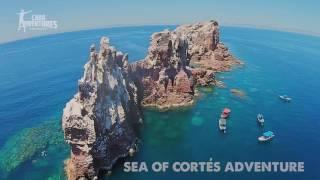 Sea of Cortez Snorkel
