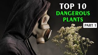 Top 10 Most Dangerous Plants In The World Part - 1 | Vlog#28 by HooplakidzLab