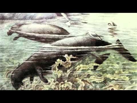 Skin & Bones - Animal Life: Steller's Sea Cow