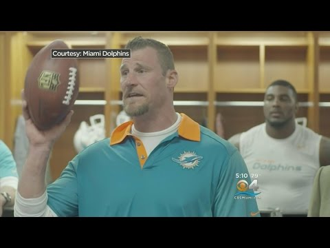 Dolphins Playing Buying What Dan Campbell Is Selling