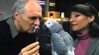 你保重,我愛你一書主角  灰鸚鵡Alex