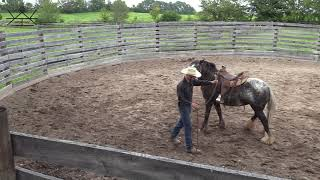 Starting a Gypsy Vanner Under Saddle Day 3 | Colt Starting with Colton Woods Horsemanship
