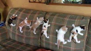 おかしい猫 - かわいい猫 - おもしろ猫動画 HD #190 https://youtu.be/O...