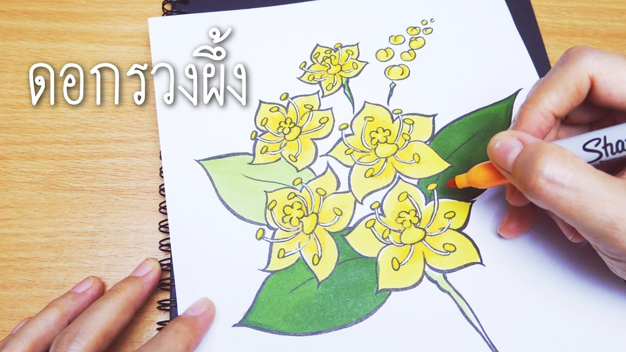 วาดร ป ดอกรวงผ ง พรรณไม ประจำร ชกาลท 10 Draw Yellow Star Flower งานฝ ม อ สอนวาดร ป เด กๆ