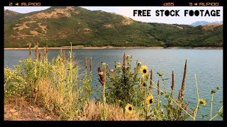 'FLOWERS BY THE LAKE' Free Stock Footage