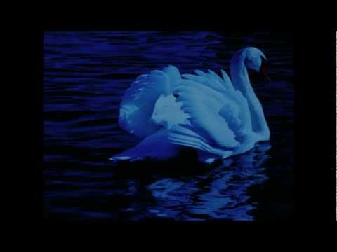 Original version: Pachelbel Canon conducted (1969) by Karajan