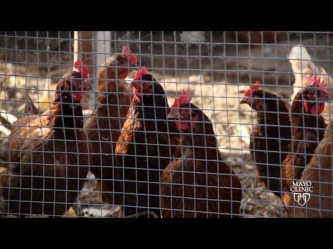 Mayo Clinic News Network Headline - Avian Flu