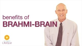 Benefits of Brahmi-Brain | John Douillard's LifeSpa