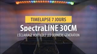 SpectraLINE - Timelapse rast rastlín pod LED záhradníckou tyčou