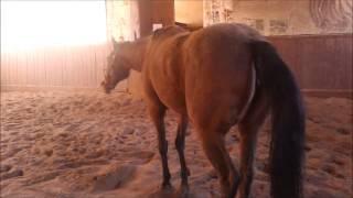 Co robią konie jak nie biegają?