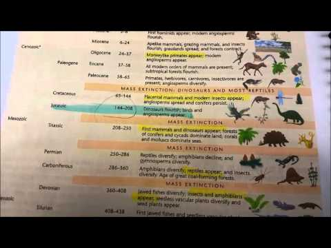 Cambrian statement and Geologic time scale from Laboratory Manual to accompany