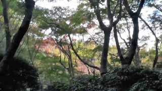 祇王寺 その1 竹林の道 京都の紅葉名所 Giou-ji Temple autumn leaves attractions in Kyoto part.1 高岡智照 検索動画 1