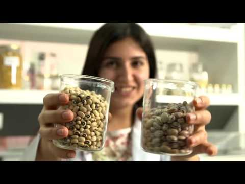 Healthy Eating and Healthy Life with Pulses– Documentary (English Subtitle)