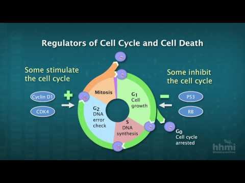 cancer genetic disease highlights HD