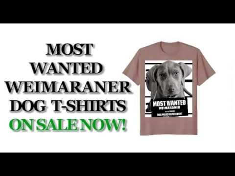 most-wanted-weimaraner-cute-funny-t-shirt---men's,-women's,-kid's---olive,-dark-heather,-pink