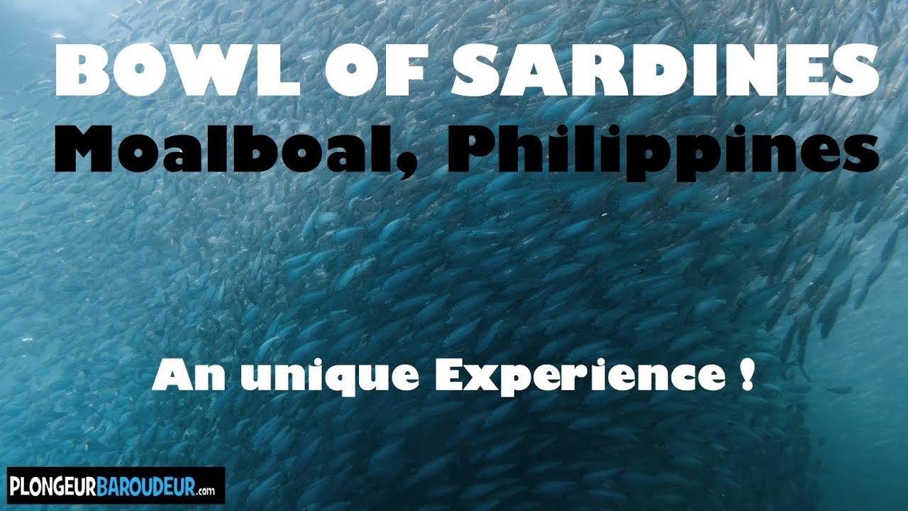 Diving Bowl Of Sardines Moalboal Philippines Plongée Banc De