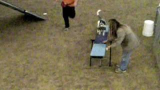 Dog Agility Training: Blue Merle Aussie ★