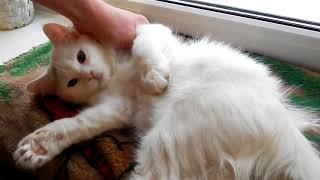 БРОШЕННЫЙ КОТЕНОК #24 Грыжа у кошек БРОШЕННЫЙ КОТИК  Уличный котенок