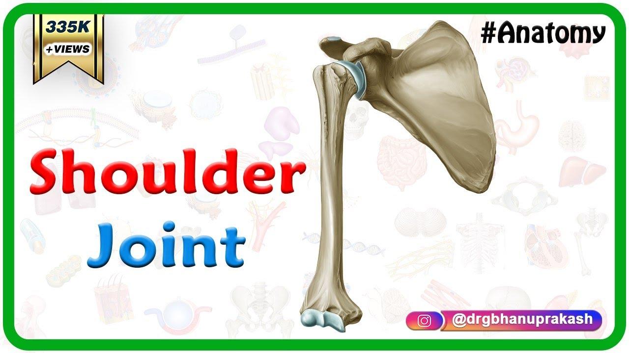 Shoulder Joint Anatomy Medvizz Anatomy Medical Animations Youtube