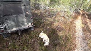 Охота 230 прогулка по лесу