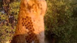 Wild bees النحل البري في صحراء نجد