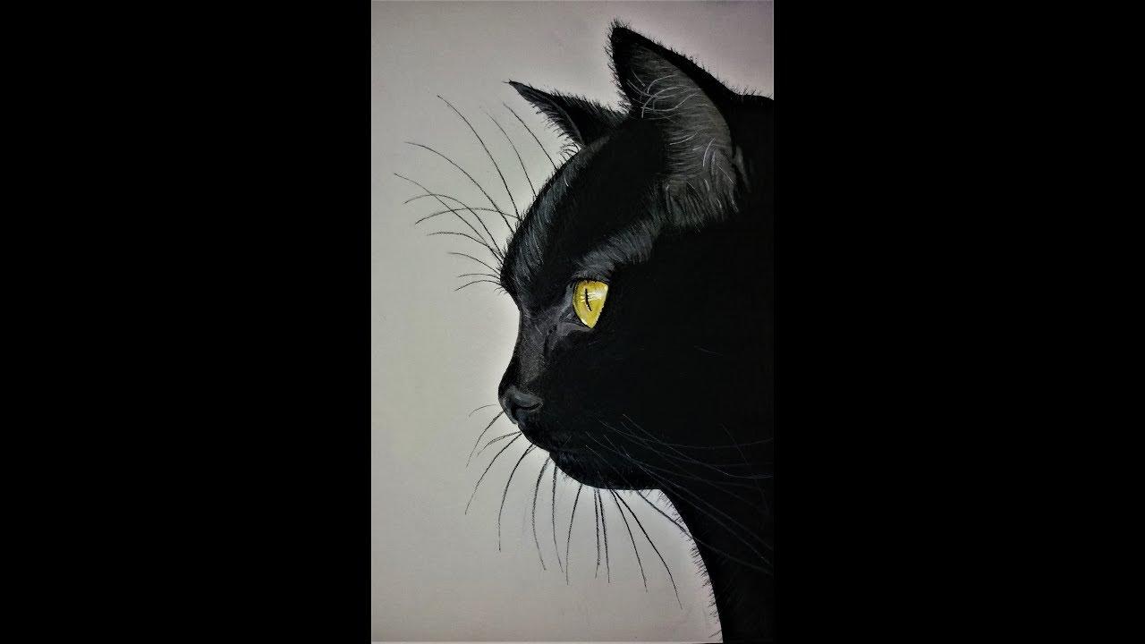Dessiner Un Chat Noir Réaliste Draw Realistic Black Cat Youtube
