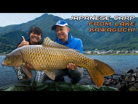 Wildwater Adventures  - Japanese carp from Lake Kawaguchi