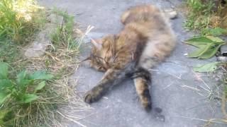 смешные коты,кошки и котята #10