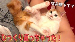 飼い主の足の間でごろ〜んとしちゃう猫が可愛すぎるんだけどwww thumbnail