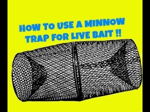 minnow trap for live bait - youtube, Fishing Bait