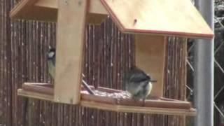 Pájaros En Comedero - Birds At Bird Table