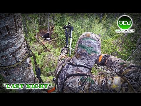 Incredible Canadian Archery Black Bear Hunt