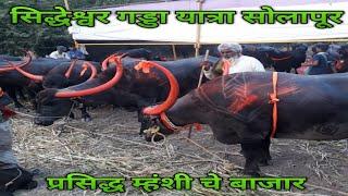 #VC6STAR ! popular buffalo market ! सिद्धेश्वर गड्डा यात्रा सोलापूर ! प्रसिद्ध म्हंशी चे बाजार