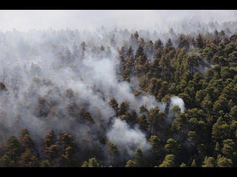 إجلاء سياح من جزيرة يونانية بعد تجاوز حرائق الغابات المناطق السياحية  - نشر قبل 58 دقيقة