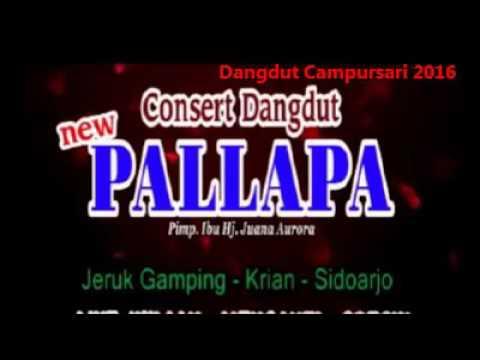 spesial New Pallapa jaipong mawar bodas