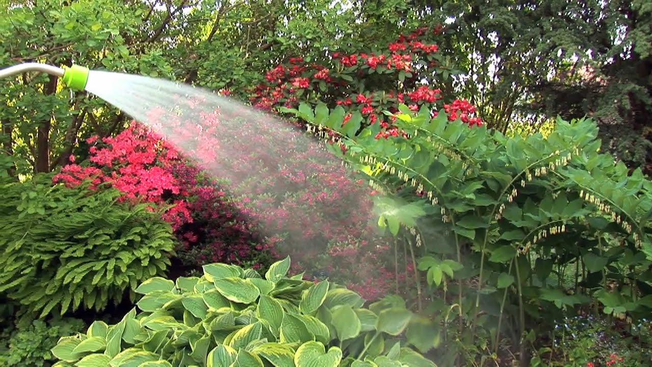 Pflanzen Im Garten Giessen   Zeitpunkt, Tipps, Bewässerung