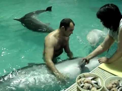 Член дельфинв