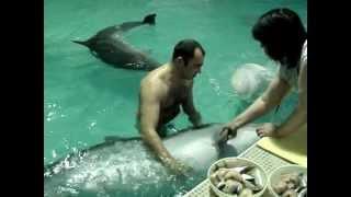 MOV00510.MPG Писька у дельфина