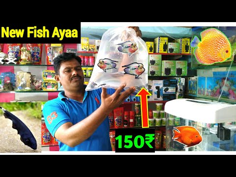 NEW FISH STOCK | Cheapest Aquarium FISH Seller | Freshwater Aquarium Fish Price With Name's 2019
