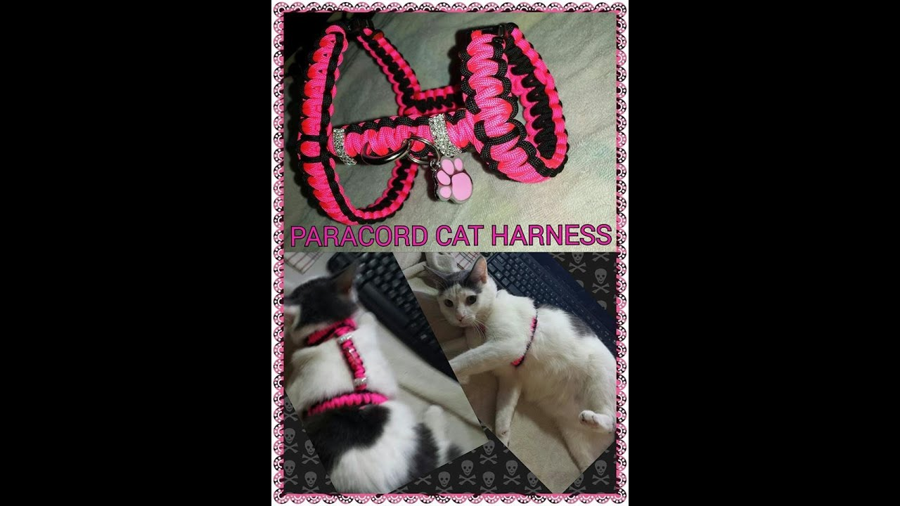 Using Dog Harness For Cat