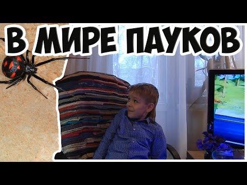 В мире пауков и скорпионов///ДЕТЯМ НЕ СМОТРЕТЬ!!!