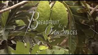 Breadfruit & Open Spaces - a documentary film by Lola Quan Bautista