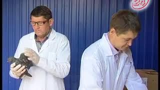 На крыльях болезни: профилактика птичьего гриппа в автограде