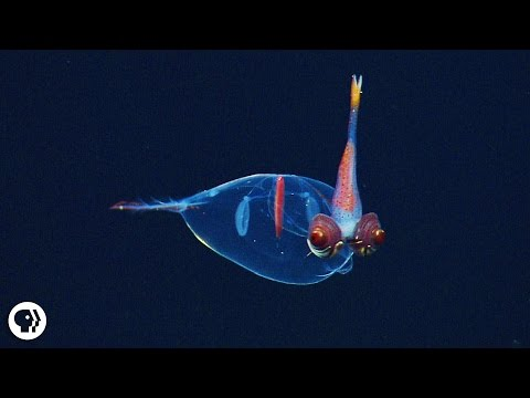8 Incredible Deep Sea Oddities!