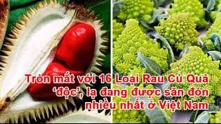Tròn Mắt với 16 Loại Rau Củ Quả 'Độc', Lạ đang được săn đón nhiều nhất ở Việt Nam